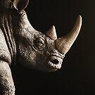 Rhino by Colleen Farrell