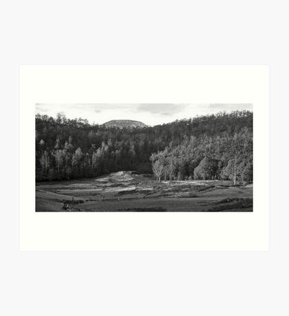 Tasmanian Meadow Art Print