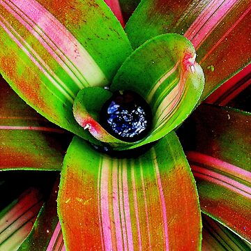 Bromeliad heart by goanna