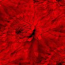 Red Hot Dahlia Flower Abstract  by SmilinEyes