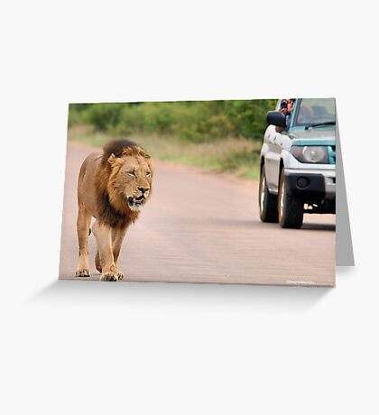 THE ULTIMATE EXPERIENCE IN KRUGER - THE LION - Panthera leo  Greeting Card