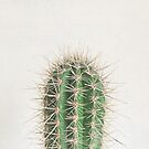 Cactus by Cassia Beck