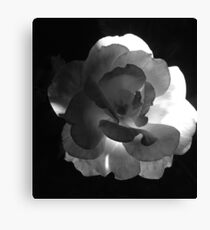 Black and White Roses 3 Canvas Print