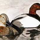 Canvasback Couple by AngieDavies
