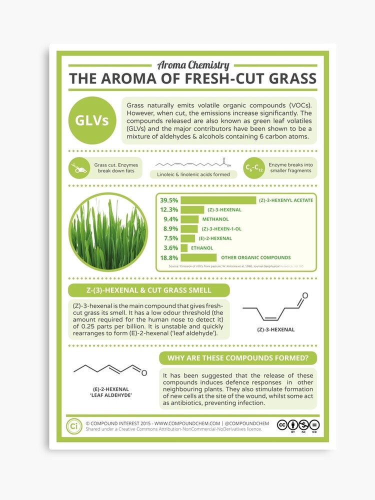 The Aroma of Fresh-Cut Grass | Canvas Print