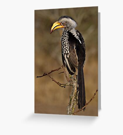 Yellow Billed Hornbill Greeting Card