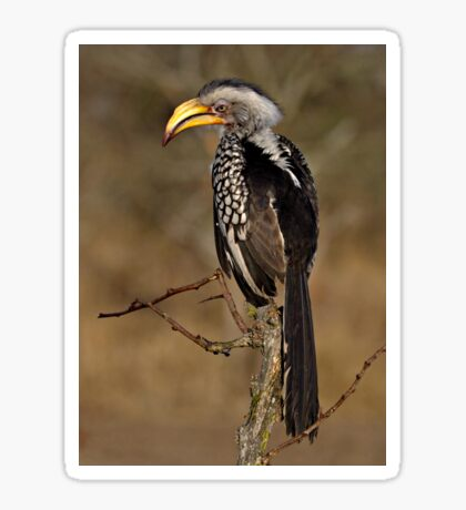 Yellow Billed Hornbill Sticker