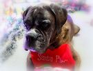 Got My Stocking Ready For Santa - Boxer Dogs Series by Evita