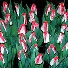Red top tulips by Arie Koene