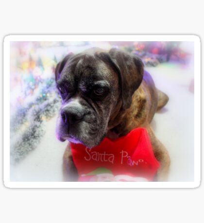 Mein Strumpf bereit für Santa - Boxer Dogs Series Sticker