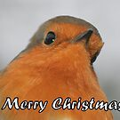 Merry Christmas - Robin by Peter Barrett