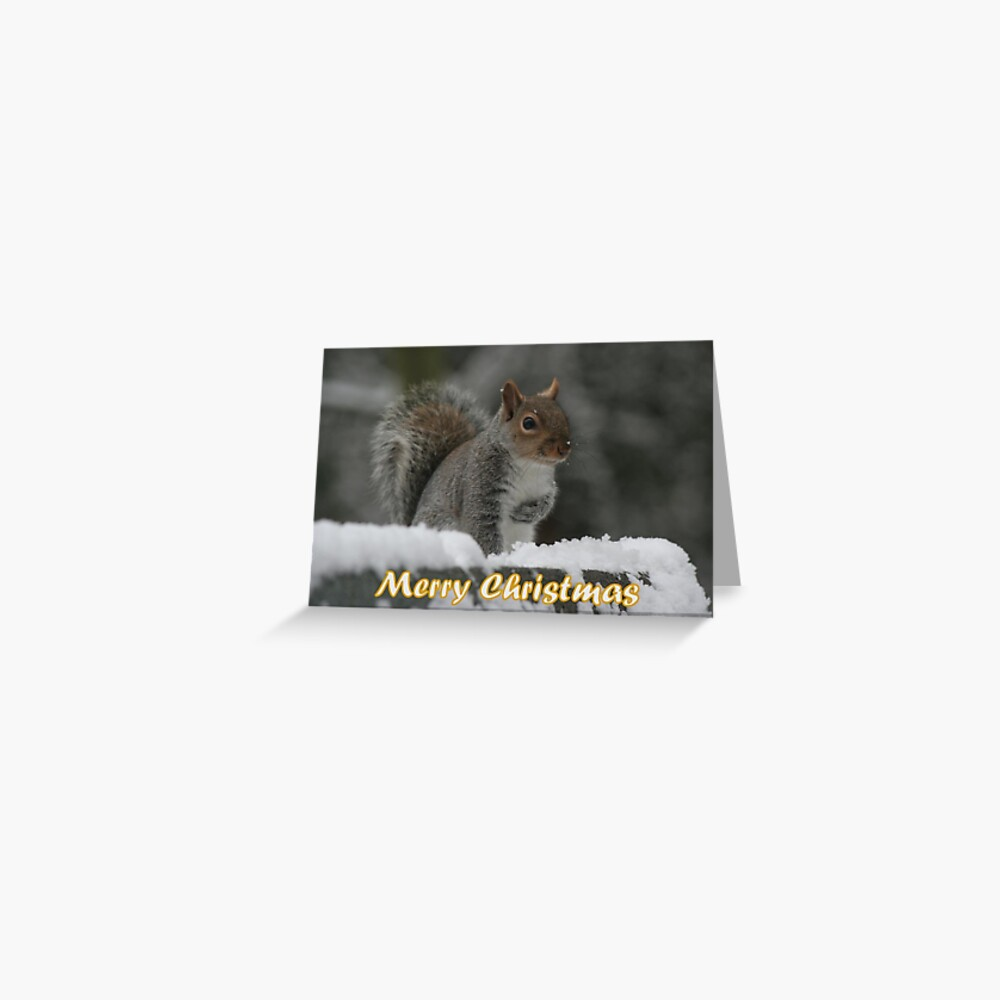 Merry Christmas - Squirrel Greeting Card