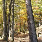 Path Through the Woods by KaytLudi