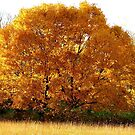 Autumn Gold by AngieDavies