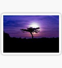 Sunset behind a tree Sticker