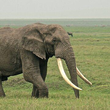 A walk across the Ngorongoro Crater by JonoBoyd