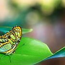 on the green leaf by Manon Boily
