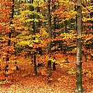 Colors of Fall by ienemien