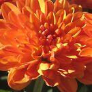 Orange Mum by brendalynn52