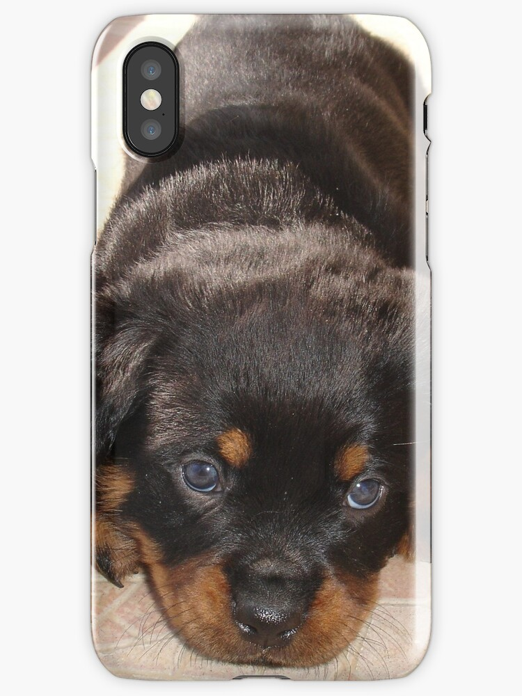 Cute Rottweiler Puppy With Head On Paws by taiche