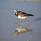 SandPiper by Bob Hardy