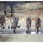 Four Boks Drinking by Soosie Jobson