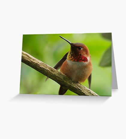 HUMMINGBIRD STRETCH Greeting Card