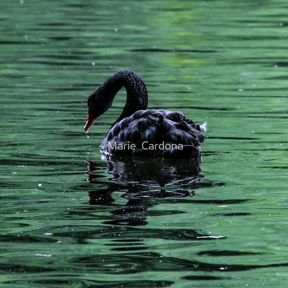 The Black Swan by Marie  Cardona