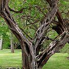 Spooky Tree by Rosalie Scanlon
