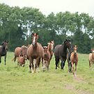 Mares and foals, Normandy by Denzil