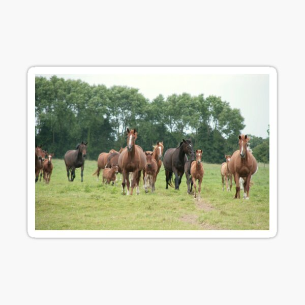 Mares and foals, Normandy Sticker