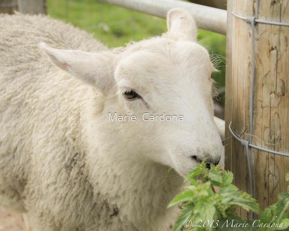 Little White Sheep by Marie  Cardona