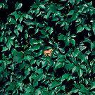 Orange Pferd im Busch von josemanuelerre