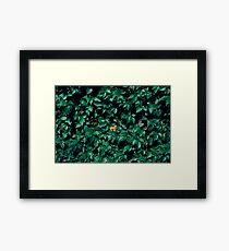Orange horse in the bush Framed Print