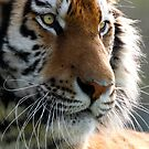 Eye of the Tiger by SWEEPER