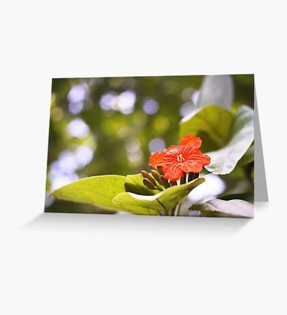 St Lucia Beauty Greeting Card