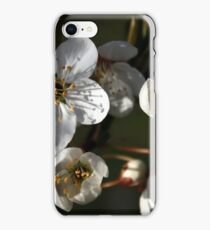 A New Season Coming into Bloom iPhone Case/Skin