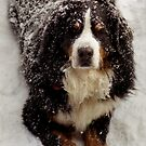 Snow Dog by Wayne King