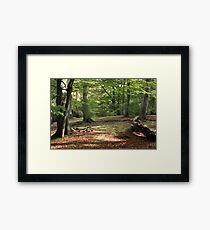 Tranquil Spaces Framed Print