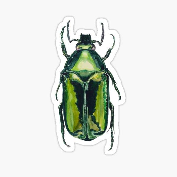 Green Scarab Beetle: Agestrata semperi female Sticker