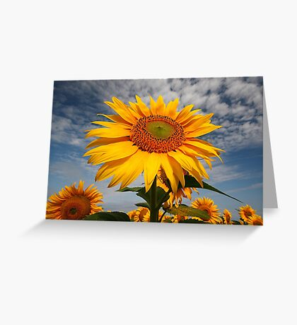 Sunflower morning . Greeting Card