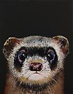 Baby Ferret by Michael Creese