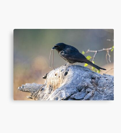 The Early Bird Catches The Worm Canvas Print