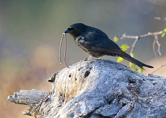 The Early Bird Catches The Worm by Michael  Moss
