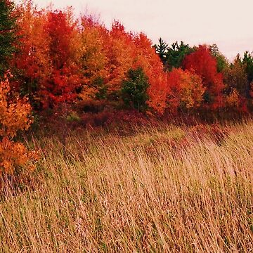 Vermont Autumn by oldfool148