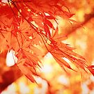 Sunlight Behind Vintage Autumn Leaves by Beverly Claire Kaiya