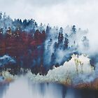 Fog by clarasprous