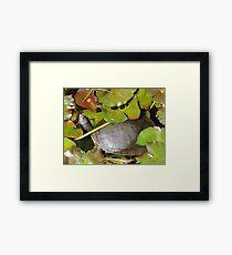 Turtle Greenery Framed Print