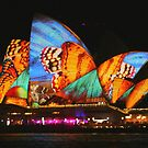 Madame Butterfly Vivid 2014 by Michael Matthews
