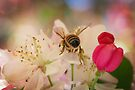 Busy Bee by yolanda